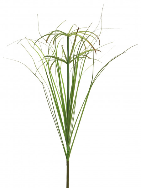 Papyrus Gras 66cm